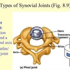 Pivot Joint Diagram J Bass Wiring Pictures Of Atlas Axis