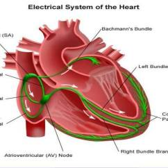 Cardiac Conduction System Diagram Sonos Wiring Pictures Of Bundle His