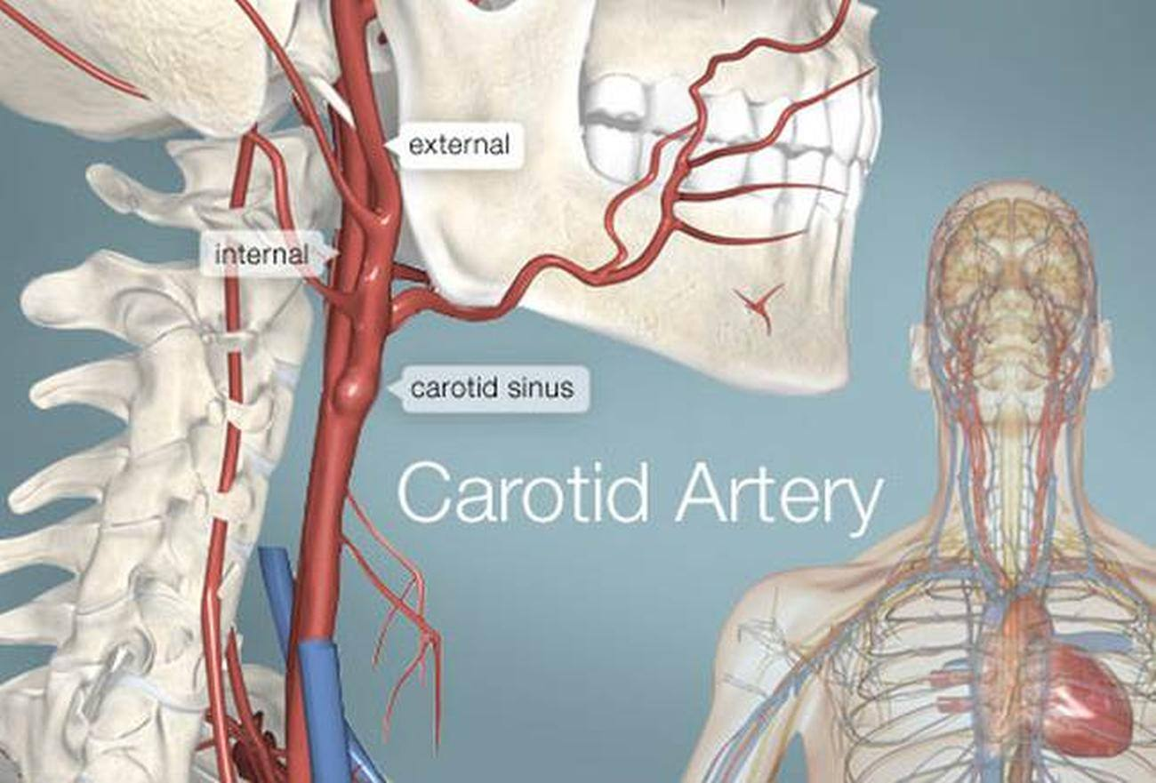 throat diagram front view vauxhall zafira fuse box pictures of carotid arteries
