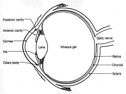 basic diagram of the eye
