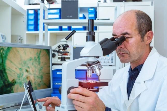 scientist examines biopsy samples