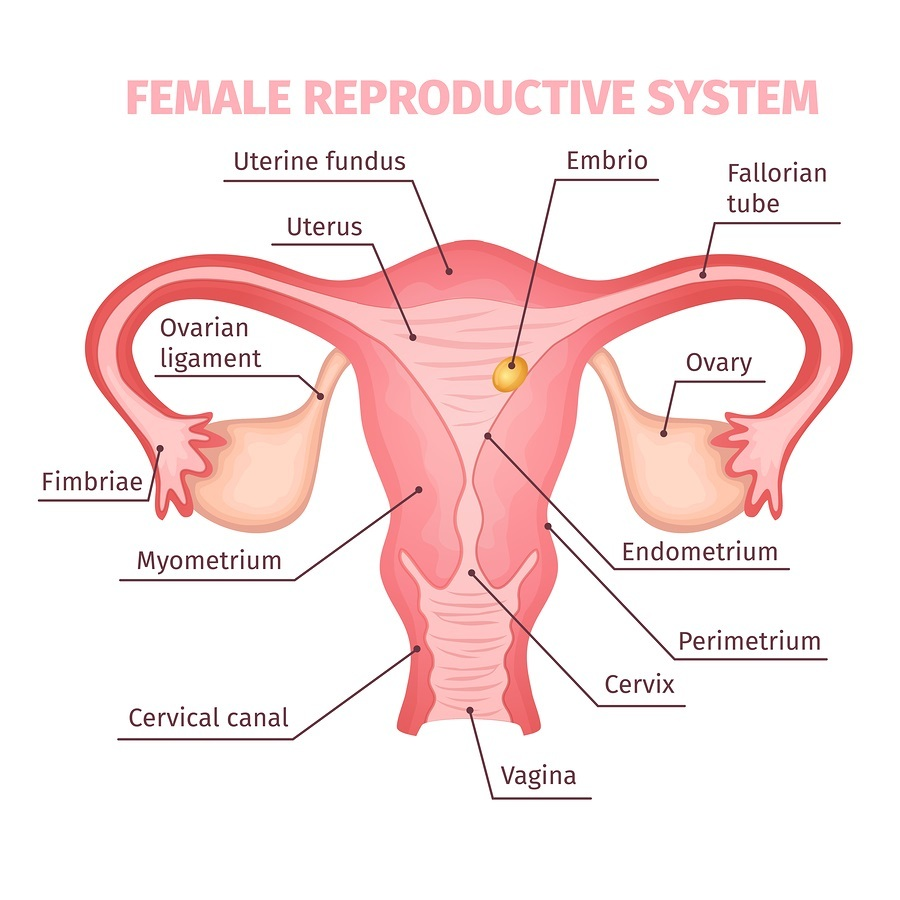 medium resolution of study ovarian cancer not ovarian millions of women have ovaries surgically removed needlessly