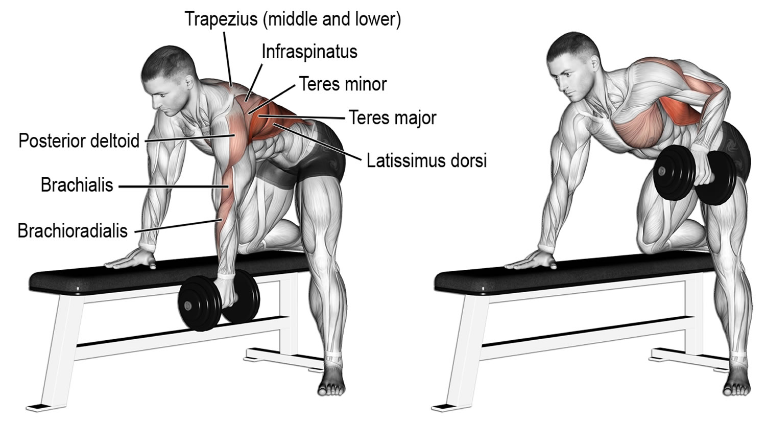 What Is The Best Workout Routine For Building Muscle