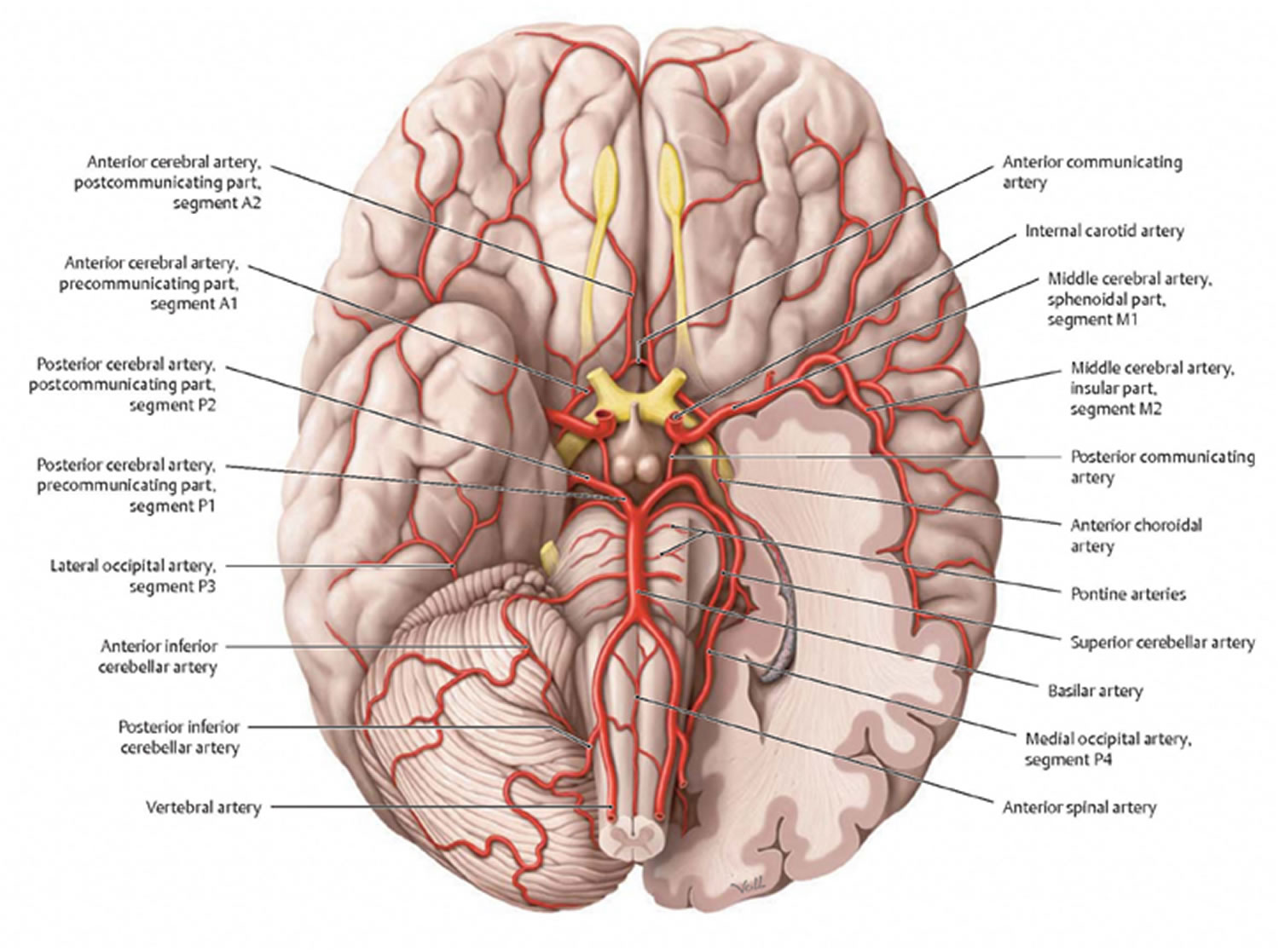 brain diagram inferior swimming pool electrical wiring what is vascular dementia symptoms causes stages and life