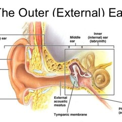 Outter Ear Diagram Labeled Human Electron Dot For Al Outer Anatomy Infection And Pain Causes