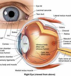 human eye [ 1500 x 1245 Pixel ]