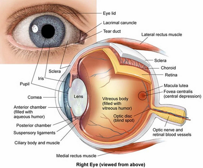 hight resolution of human eye
