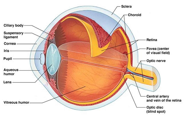 Eye Floaters Black Eye Floaters And Eye Flashes