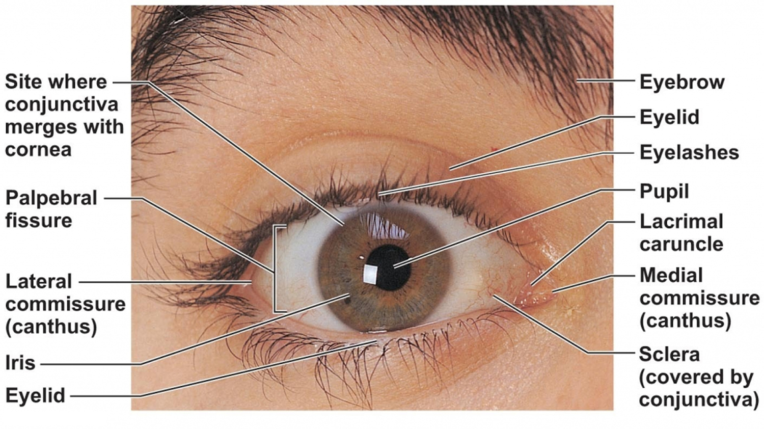 Eye Infections In Baby Children Amp Adults