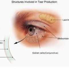 Parts Of The Eyelid Diagram 1967 Dodge Dart Wiring Eye Disease And Problems Common Rare Diabetic