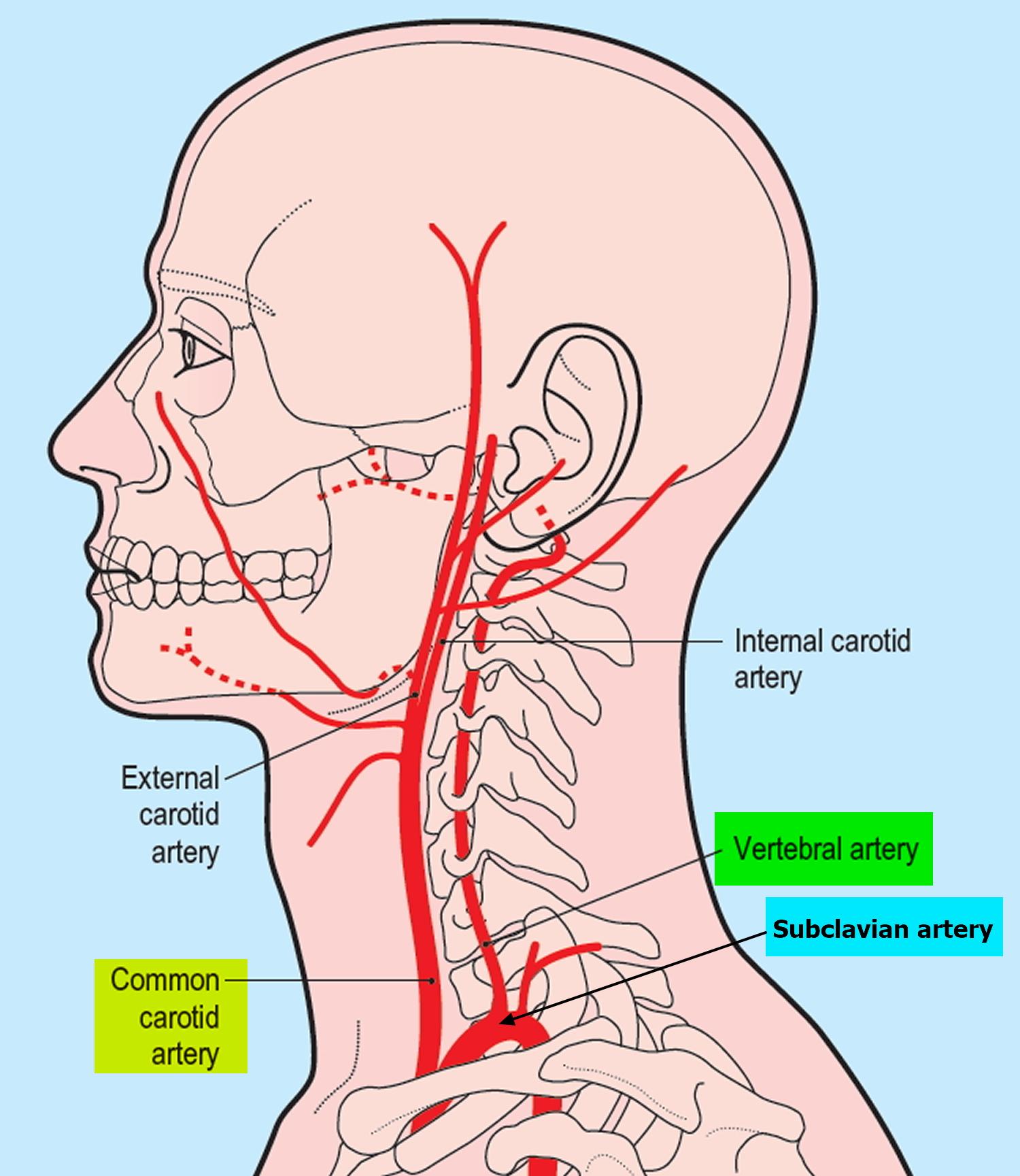 hight resolution of vertebral artery segments