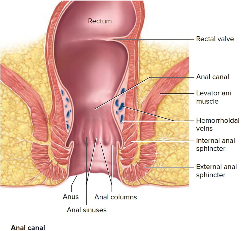 Large Intestine Anatomy Function Location Length And
