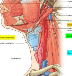 carotid artery system [ 1500 x 1119 Pixel ]