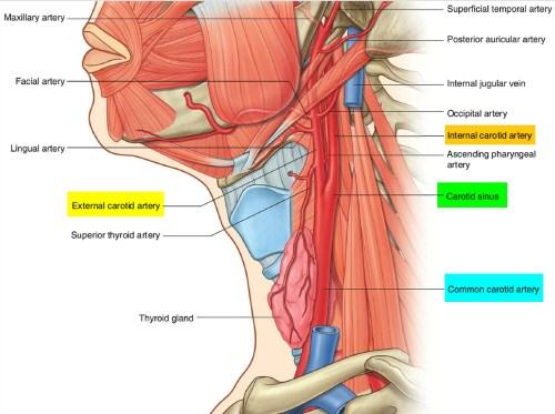 small resolution of carotid artery system