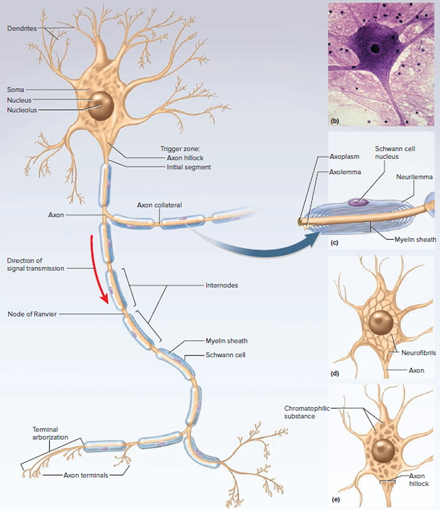 hight resolution of the nervous system