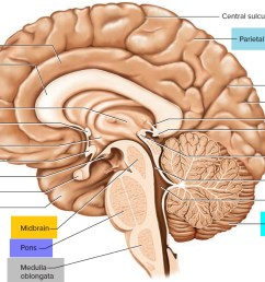 image result for brain  [ 1500 x 902 Pixel ]
