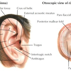 Ear Anatomy Diagram Labeled Apache Quad Wiring Blank Of Middle Quiz Label Medium Resolution Human Parts Structure And Problems