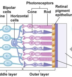 human eye anatomy parts of the eye and structure of the human eye rh healthjade com eye diagram rods simple diagram of the eye [ 1500 x 666 Pixel ]