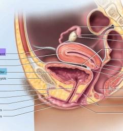 uterus anatomy [ 1500 x 863 Pixel ]
