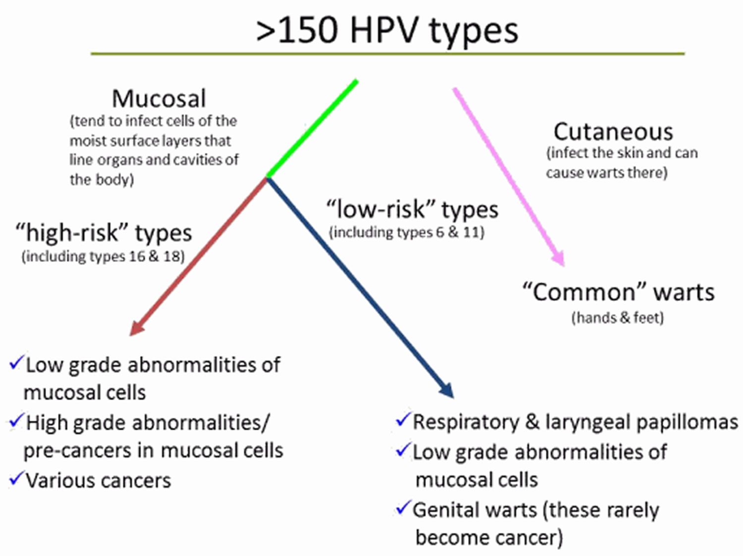 hight resolution of hpv types