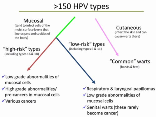 small resolution of hpv types