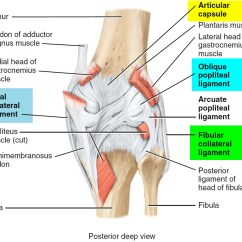 Diagram Of The Knee And Ligaments 120 Volt Outlet Wiring Torn Meniscus Signs Symptoms Test Diagnosis