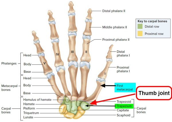 Thumb Arthritis Causes Symptoms Exercises Splint