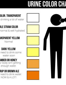 Urine color also chart what is normal does it mean rh healthjade