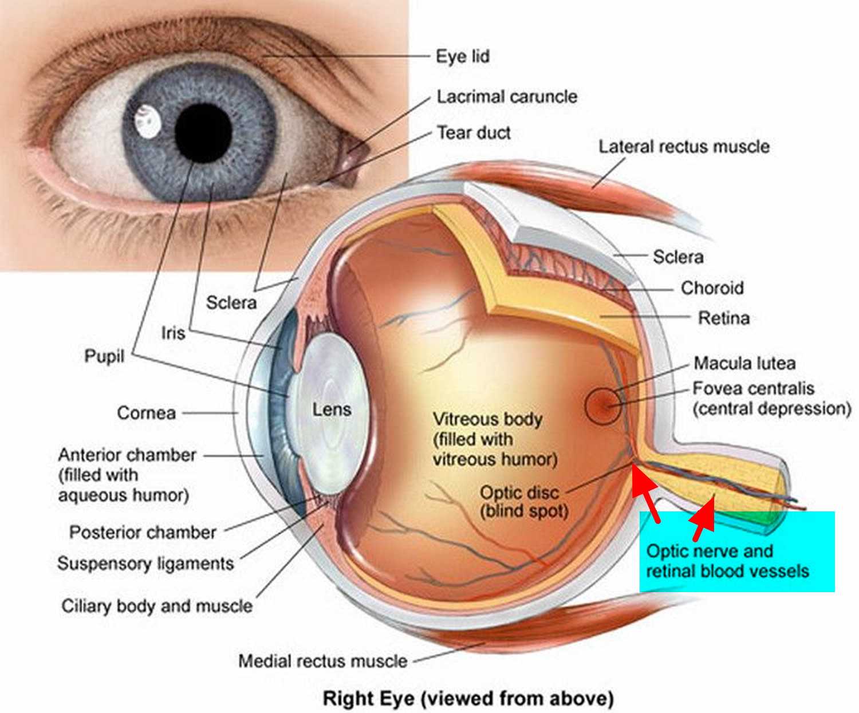 human eye diagram blind spot fender jazz deluxe wiring optic neuritis causes symptoms prognosis diagnosis