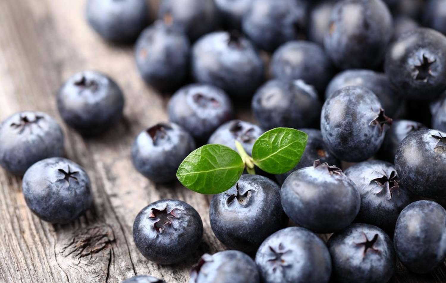 Bilberry, Bilberry Extract
