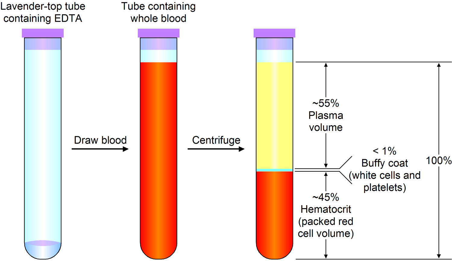 Red Blood Cells Function