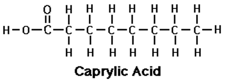 Caprylic acid, caprylic acid triglyceride benefits, uses