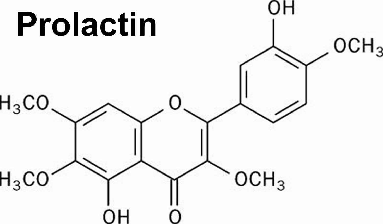 Prolactin hormone function, prolactin blood test & normal