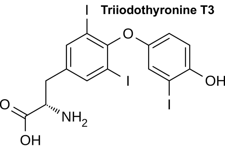 Triiodothyronine T3 function, triiodothyronine normal range