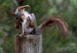 squirrel sitting
