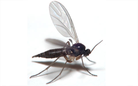 How to get rid of Gnats in Kitchen House Bathroom