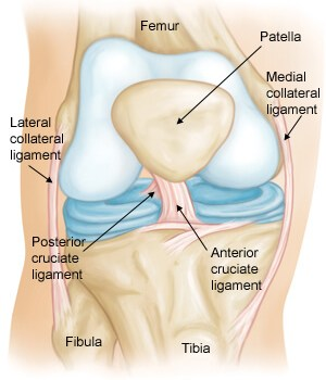 ligaments around knee joint