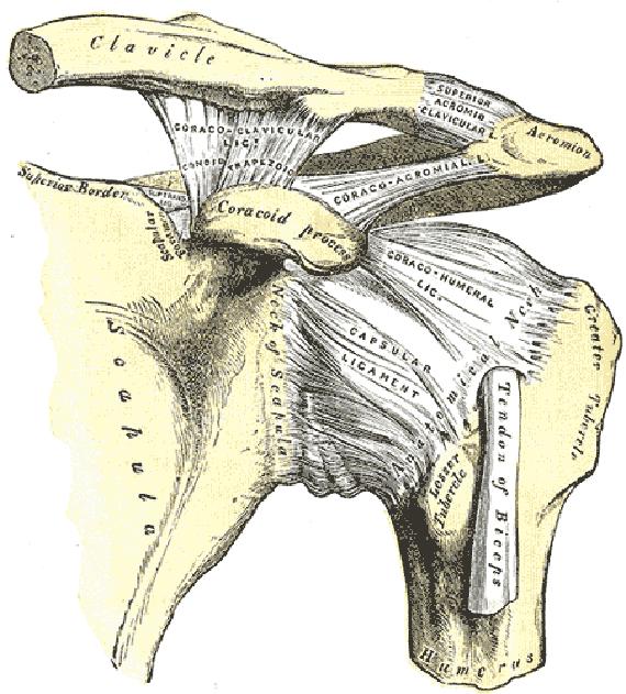 surfing shoulder dislocation