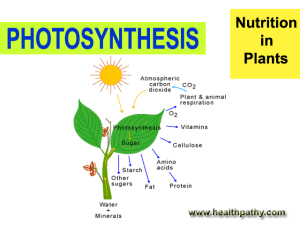 nutrition in plant and animals
