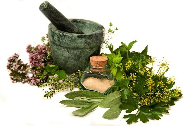 Did you Know about these 10 herbs that can heal respiratory infections and boost lung health
