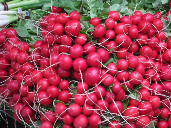 Health Benefits Of eating Radishes Everyday Health Save Blog