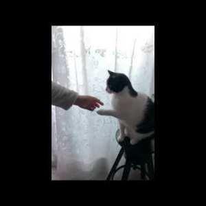 Cat Funny Moments Videos #shorts 😻 Смешные Кошки Приколы