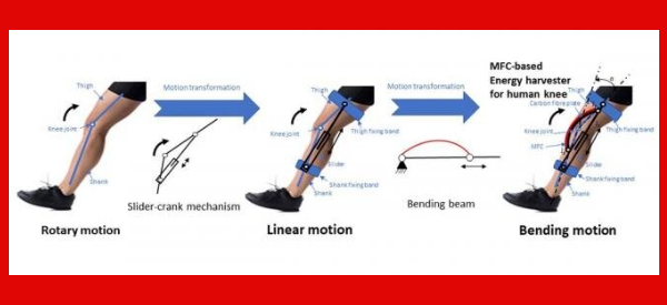 Energy Harvesting from the Human Knee