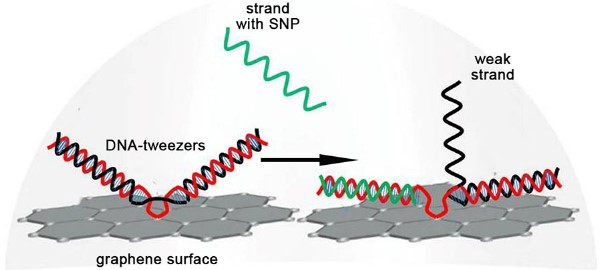 Biosensor Chip Detects Mutation 1000X Better