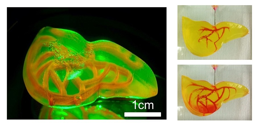 New 3D System Prints Organs Faster [video]