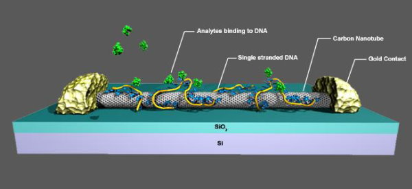 Nanotube Sensors Use DNA to Specify Targets