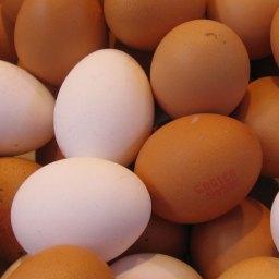 ไข่ ! 12 ประโยชน์ของไข่ และสาระน่ารู้เกี่ยวกับไข่