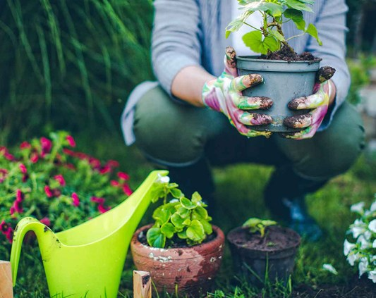 Person potting plants and watering can