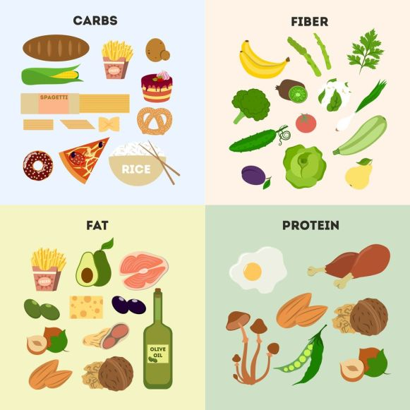 image showing fats, fibers, proteins and carbs component of food