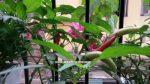 Urban Gardening India